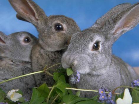 bunny-wallpapers-bunny-rabbits-128636_1024_768.jpg
