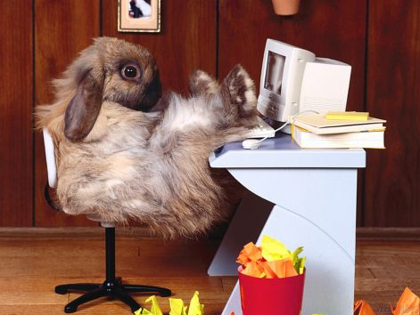 bunny-wallpapers-bunny-rabbits-128638_1024_768.jpg