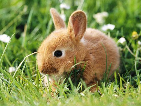 bunny-wallpapers-bunny-rabbits-128639_1024_768.jpg