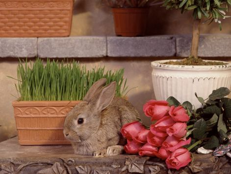 bunny-wallpapers-bunny-rabbits-128642_1024_768.jpg
