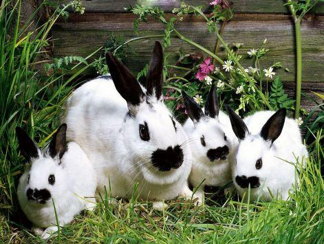 bunny-wallpapers-bunny-rabbits-149128_1024_768.jpg