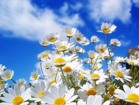 field_of_flowers205.jpg