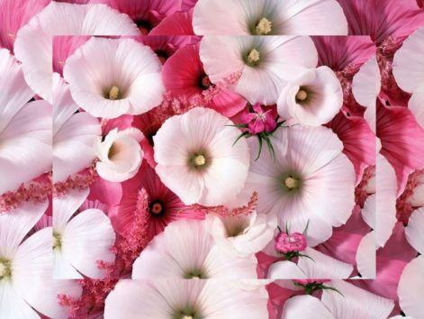 flowers_gift2016.jpg