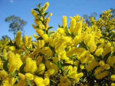 in_bloom2010.jpg