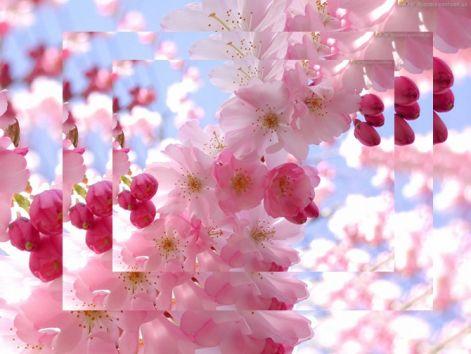 in_bloom205.jpg