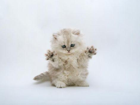 kitten_desktop.jpg