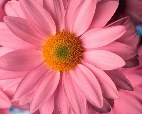 pink_beauty_2022.jpg