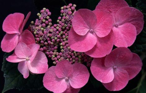 pink_beauty_208.jpg