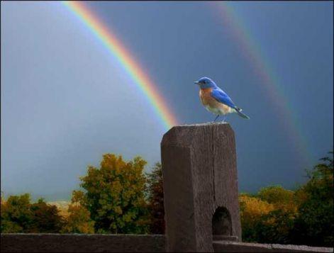 regenbogen-4.jpg