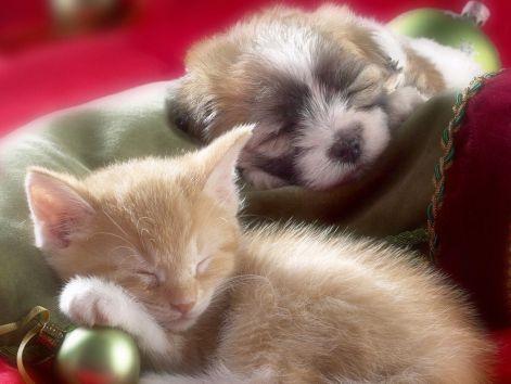 sleepy_whiskers_kitten_and_puppy_1.jpg