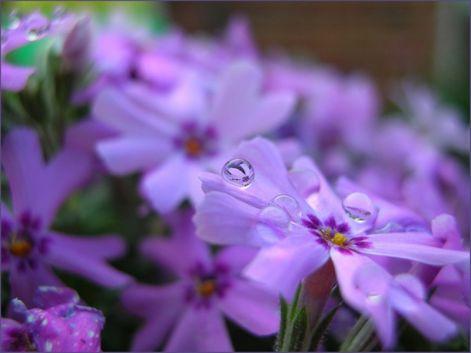 spisharam---away-flowers_.jpg