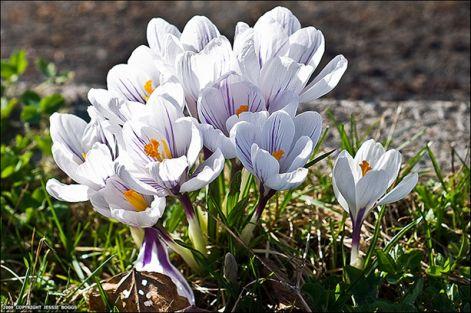 spring_flowers_9.jpg