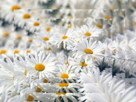 white20flower_205.jpg