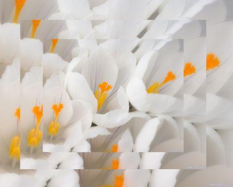 white20flower_208.jpg
